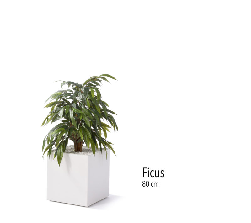 Büropflanze Kunstpflanze Ficus klein