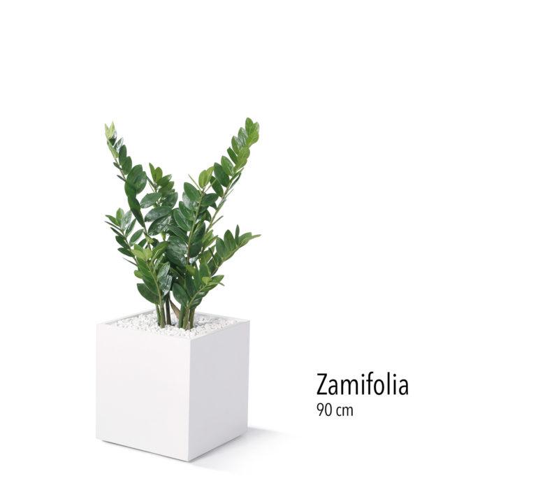Büropflanze Kunstpflanze Zamifolia klein