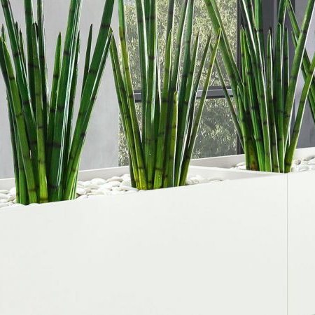 Büropflanze Kunstpflanze in Reihe