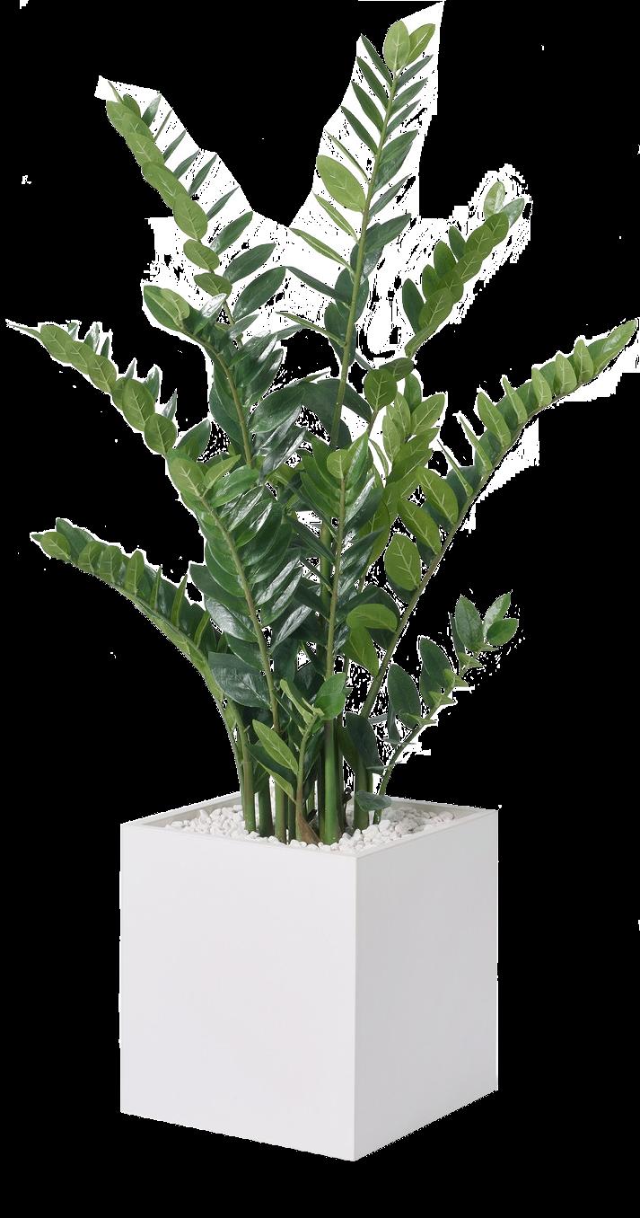 Büropflanze Kunstpflanze Zamifolia Ansicht