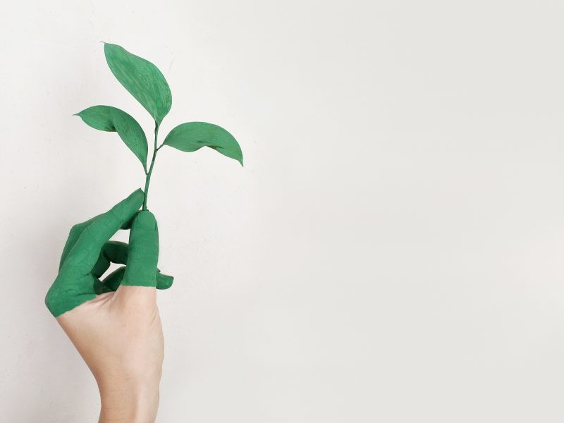 negative-space-green-fingers-alena-koval